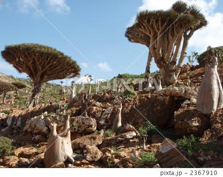 世界遺産ソコトラ島ホムヒルの風景 2367910