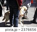 盲導犬 2376656