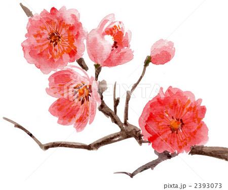 plum blossoms218pix. 2393073