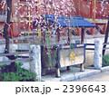 湯島天神 枝垂れ梅 2396643