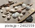 海岸にあった貝、流木、石 2402559