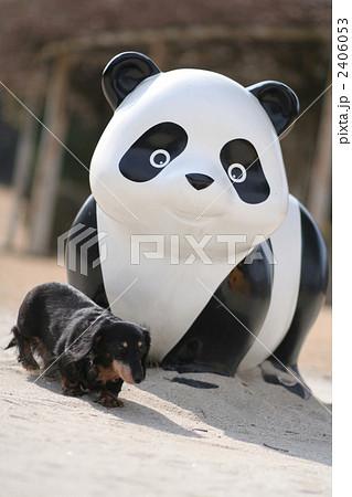 パンダと犬 2406053