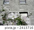 アーモンドの花 2413716
