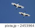タンチョウ 丹頂 鶴の写真 2453964