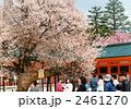 平安の桜 2461270