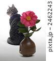 椿と猫 2462243
