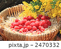 ラズベリー キイチゴ 木いちごの写真 2470332
