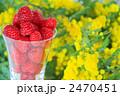 ラズベリー キイチゴ 木いちごの写真 2470451