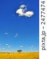 花畑 青空 草原の写真 2477474