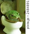 トイレでカンガエル 2484891
