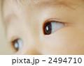 男の子 幼児 眼差しの写真 2494710