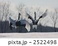 鶴 タンチョウ 丹頂鶴の写真 2522498