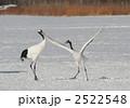 タンチョウ 鶴 雪景色の写真 2522548