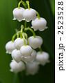 スズラン すずらん 植物の写真 2523528