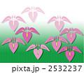 菖蒲 2532237