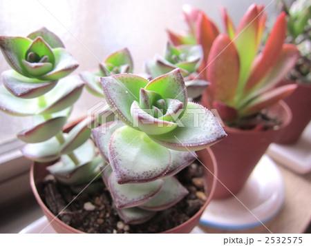 多肉植物 2532575