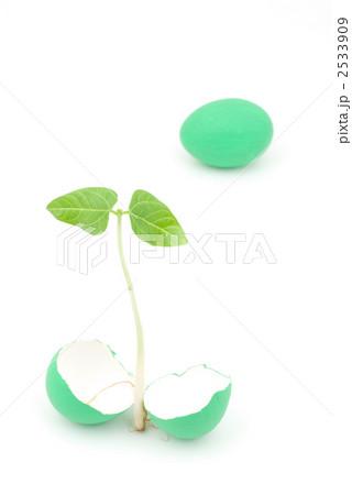 卵と新芽 2533909