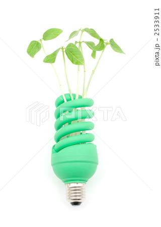 電球と新芽 2533911