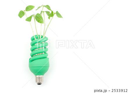 電球と新芽 2533912