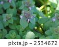 春の姫踊子草 2534672