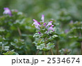 春の仏の座 花の格好が笑っているよう・・・ 2534674