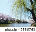 堀 柳 並木の写真 2536763