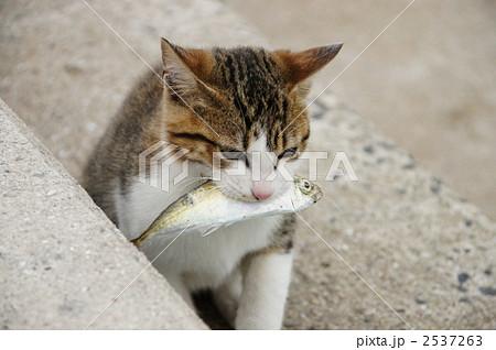 お魚くわえたどら猫 2537263