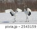 タンチョウ 鶴 丹頂鶴の写真 2543159