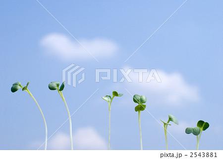 並んだ新芽と青空 2543881