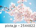桜吹雪合成 2544822
