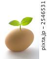 発芽 エコ 成長の写真 2546531