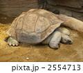ガラパゴスゾウガメ リクガメ ゾウガメの写真 2554713