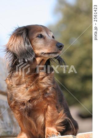 公園のベンチと犬 2561423