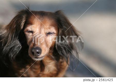 公園のベンチと犬の平和な表情 2561425