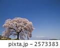一本桜 2573383
