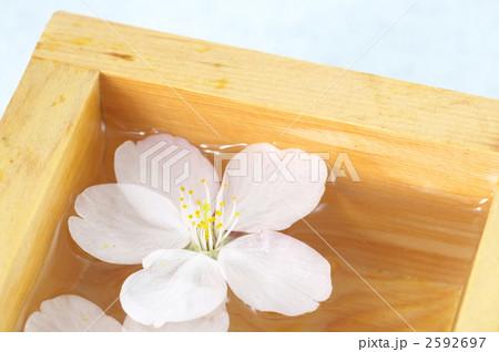 枡酒と桜の写真素材 [2592697] - PIXTA