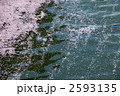 花いかだ 花筏 花びらの写真 2593135