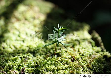 森の中の芽生え 2593630