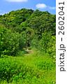 原生林 やんばる 山の写真 2602041