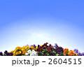 パンジー 三色スミレ 花の写真 2604515