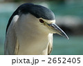 五位鷺 ゴイサギ サギの写真 2652405