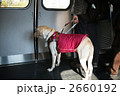 盲導犬 2660192