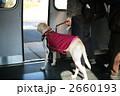盲導犬 2660193