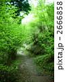 林道 小道 森林の写真 2666858
