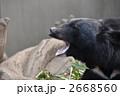 クマのあくび 2668560