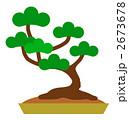 マツ 盆栽 松のイラスト 2673678