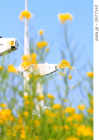 風力発電機のプロペラと快晴の菜の花畑 縦 2677142