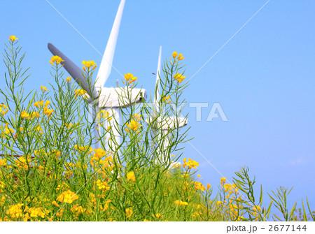 風力発電機のプロペラと晴天の菜の花畑 2677144