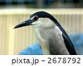 サギ ゴイサギ 五位鷺の写真 2678792