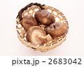 生しいたけ 生椎茸 生シイタケの写真 2683042